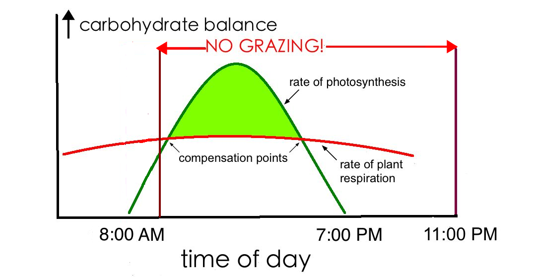 rate of photsynthesis