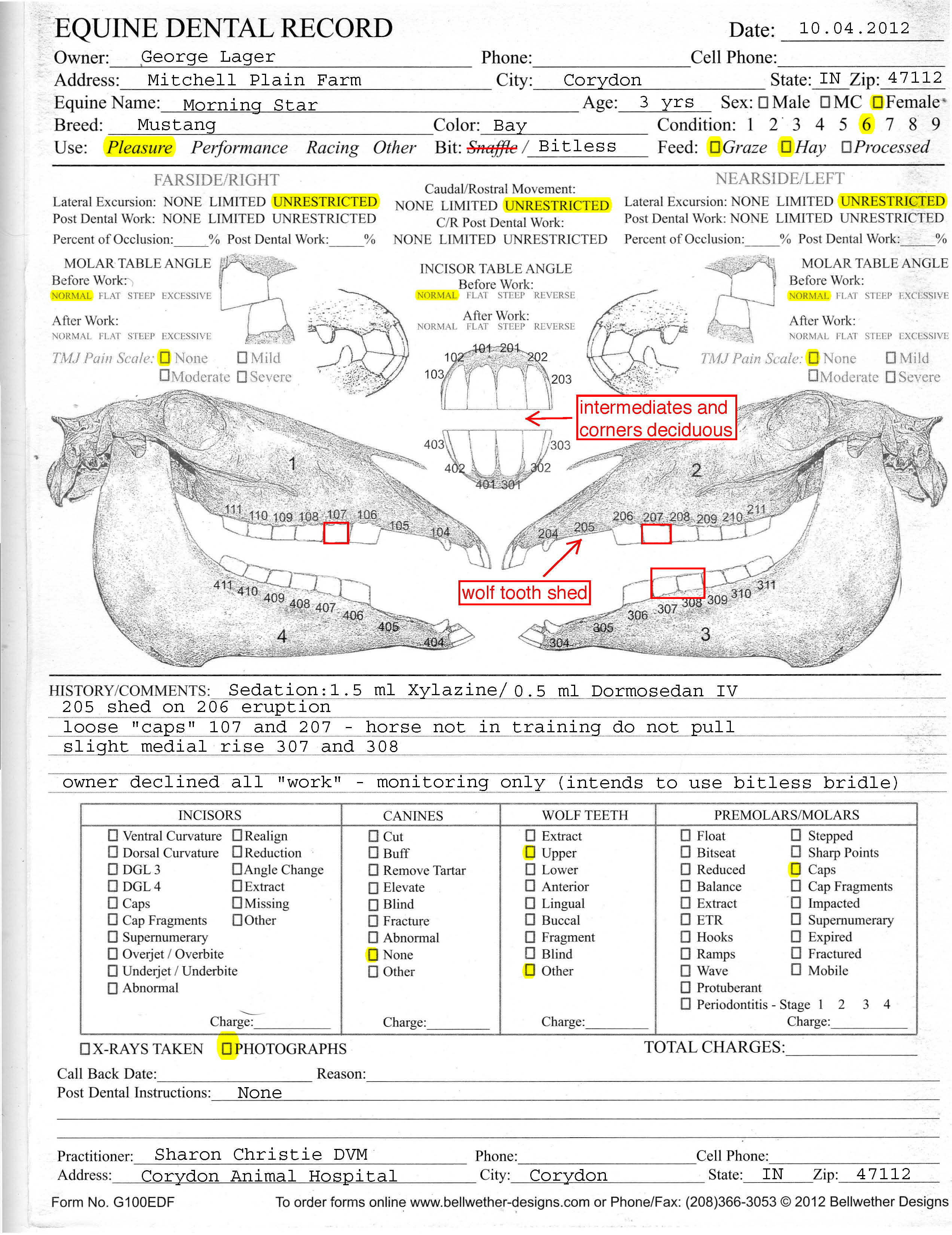 Horse Teeth Age Diagram